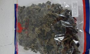 hongos-hongo-oreja-de-raton-453-grms